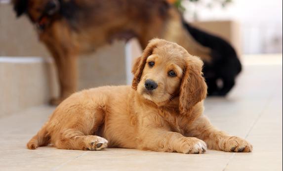 Votre animal de compagnie et le vétérinaire